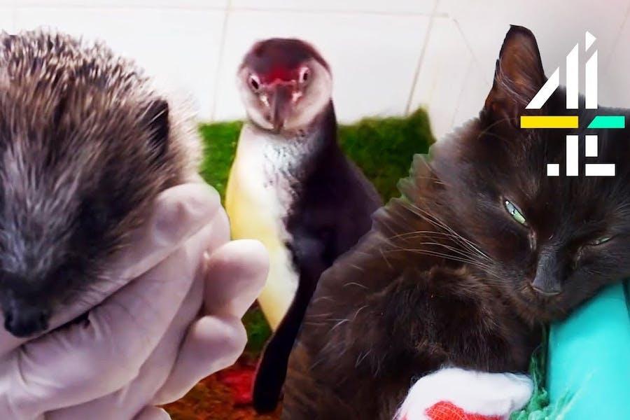 The Supervet: Noel Fitzpatrick   Most Unusual Animal Patients & Vet Surgeries