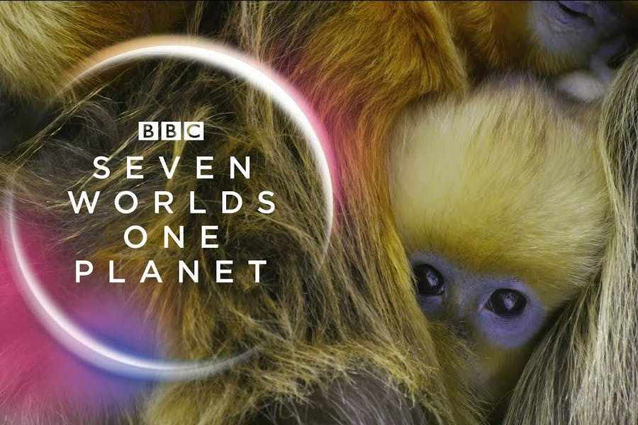 Seven Worlds, One Planet trailer