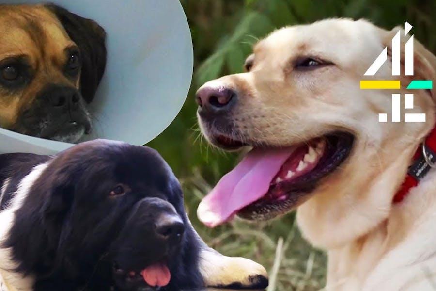 The Supervet: Noel Fitzpatrick   Most Heartwarming Dog Moments
